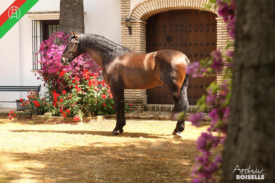 caballos11