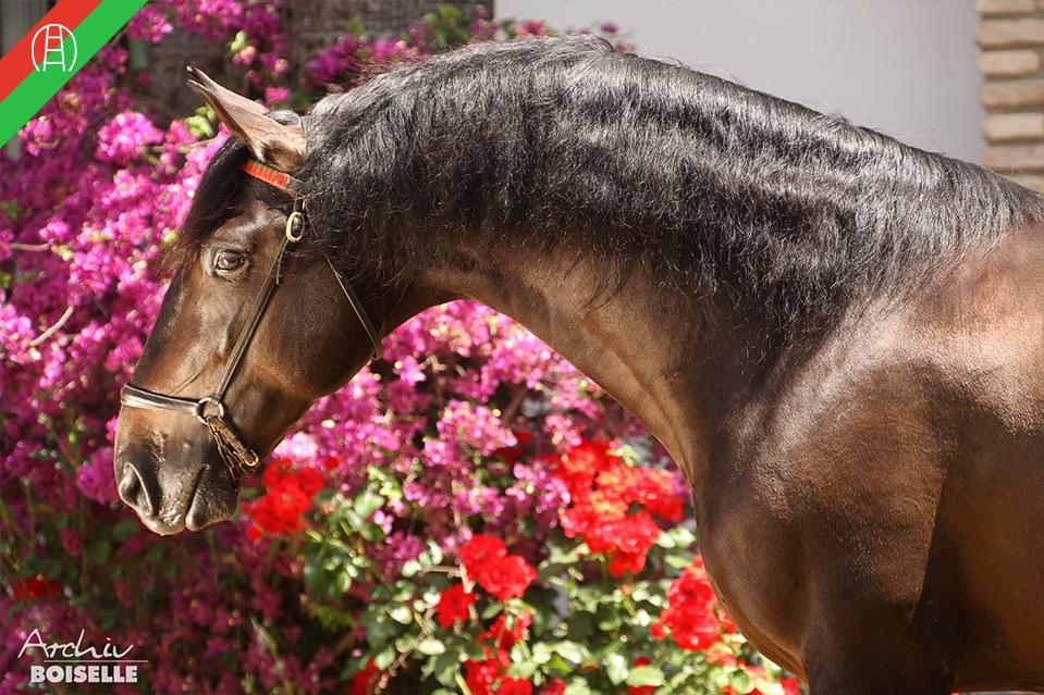 caballos12