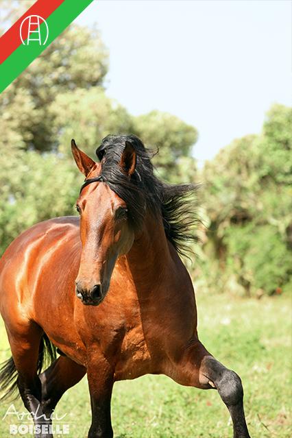caballos14