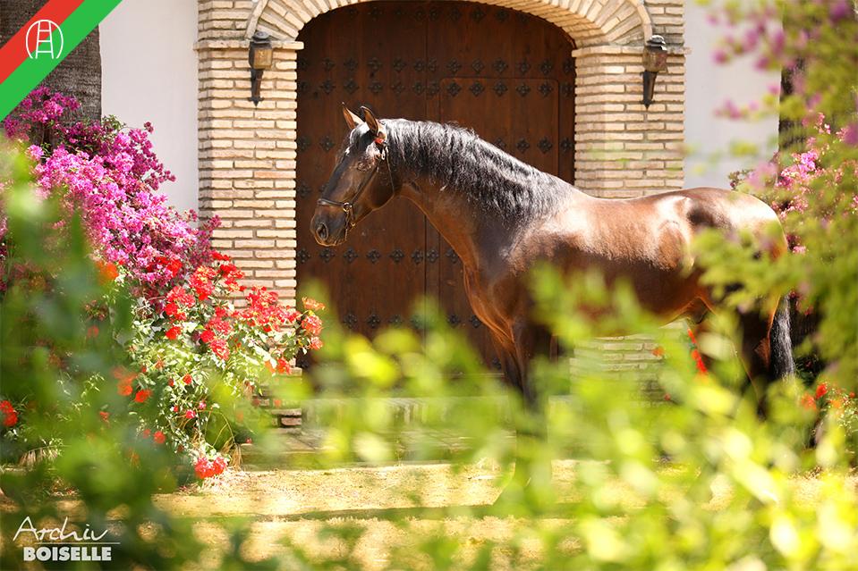 caballos15