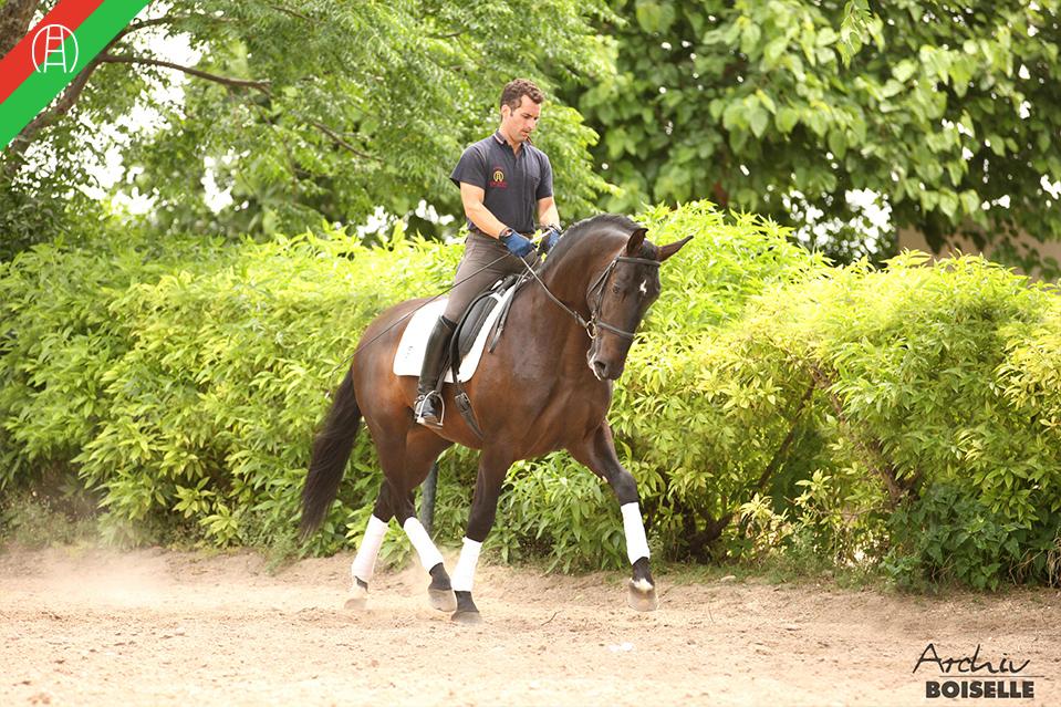 caballos17