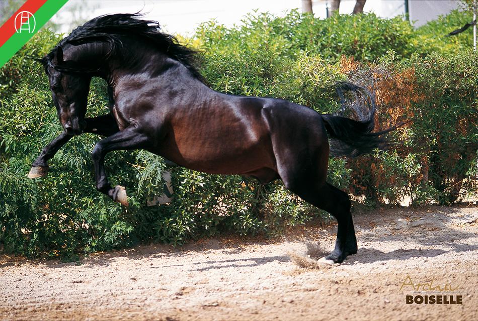 caballos19