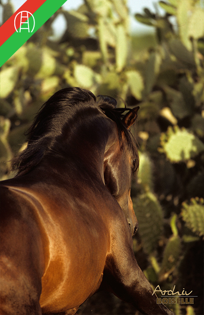 caballos20