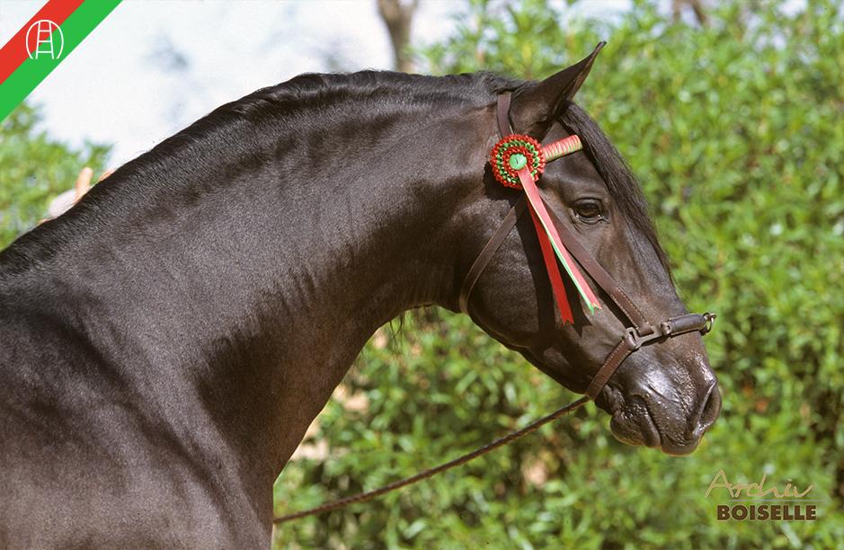 caballos22