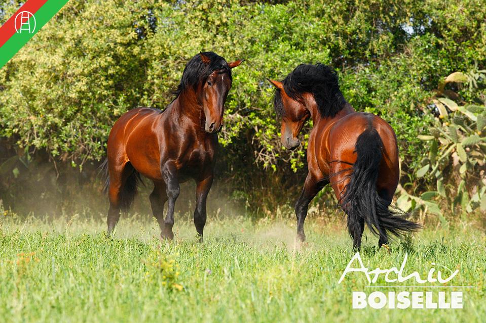 caballos25