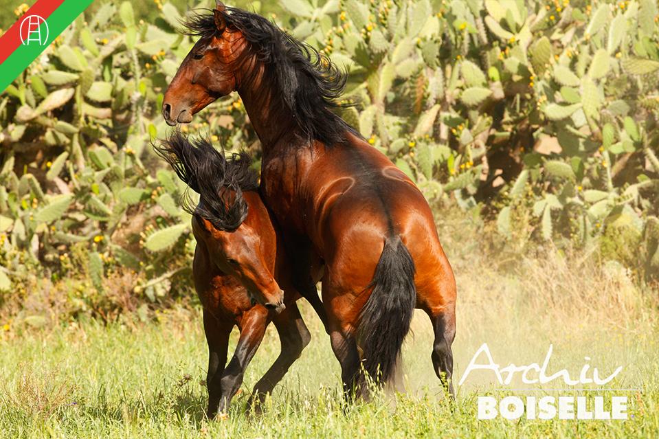 caballos26