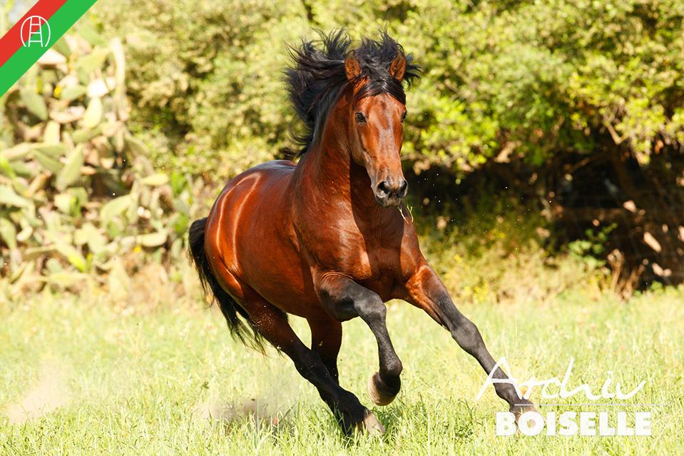 caballos27