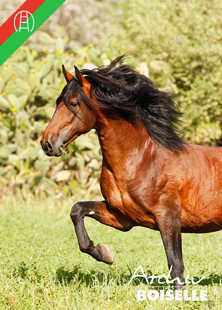 caballos28