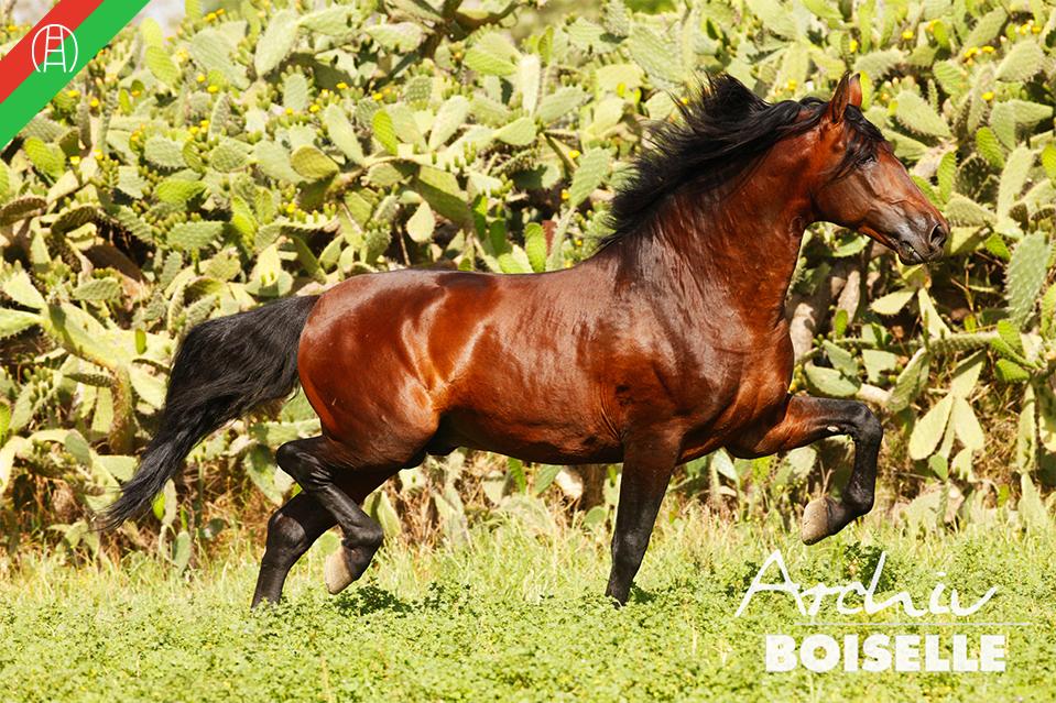 caballos29