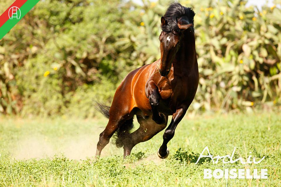 caballos33