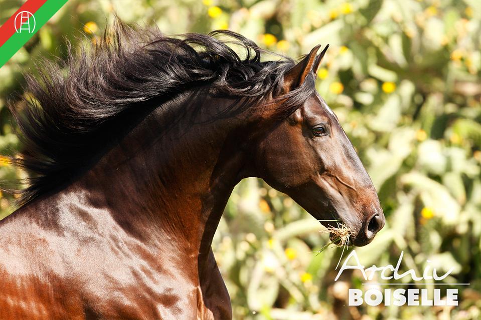 caballos34