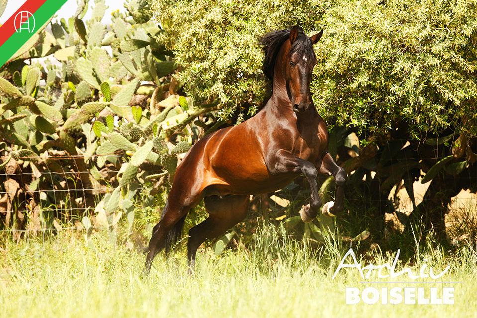 caballos36
