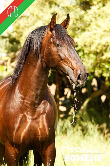 caballos38