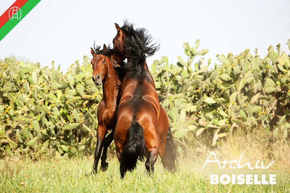 caballos40