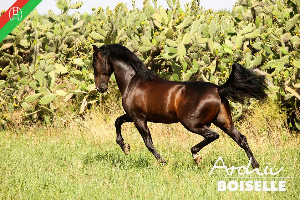 caballos41