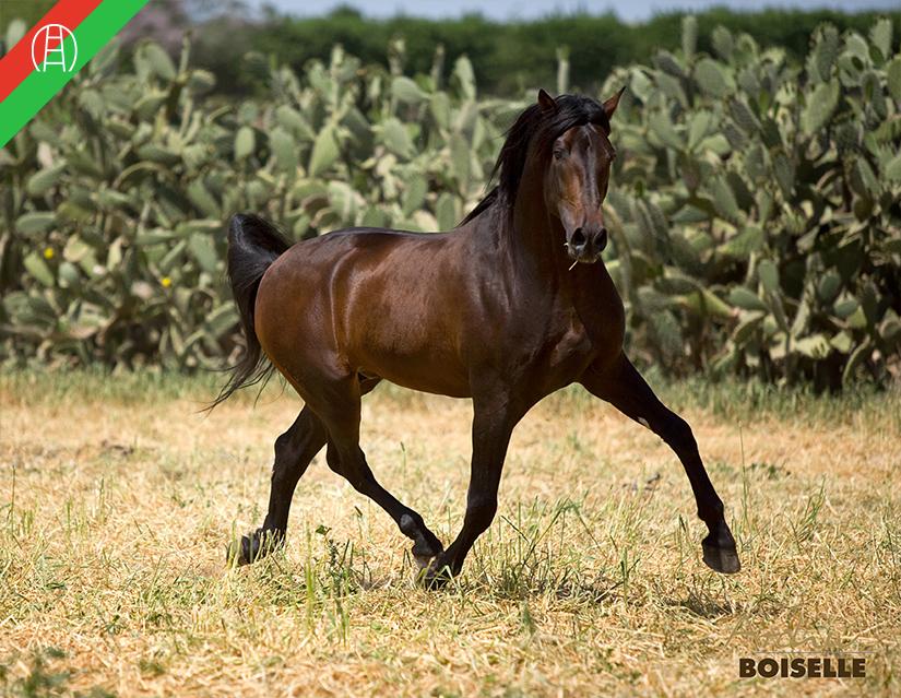 caballos46